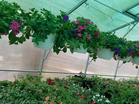 balkonove-kvetiny-1