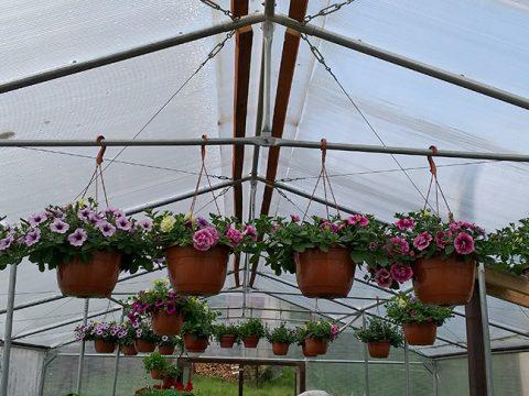 balkonove-kvetiny-12