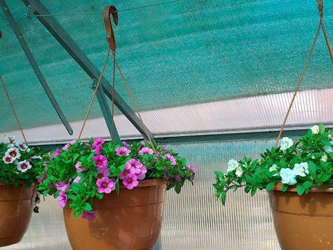 balkonove-kvetiny-2
