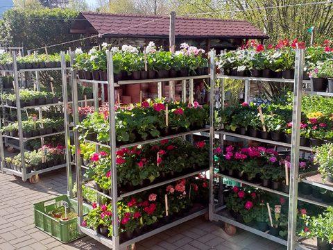 balkonove-kvetiny-8