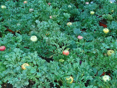 jarni-rostliny-1