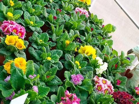 jarni-rostliny-10