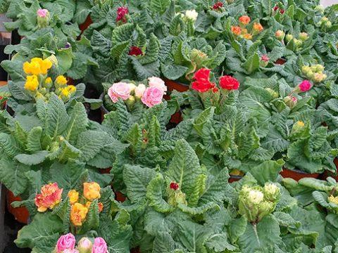 jarni-rostliny-14