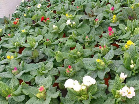 jarni-rostliny-15
