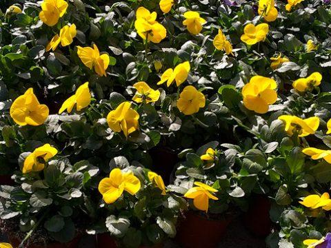 jarni-rostliny-6