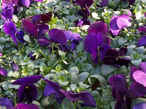 jarni-rostliny-7