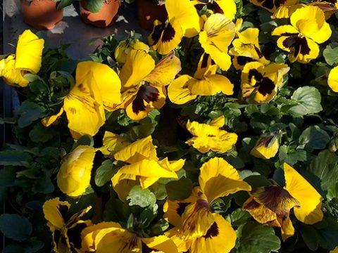 jarni-rostliny-8
