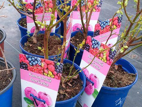 ovocne-stromky-1