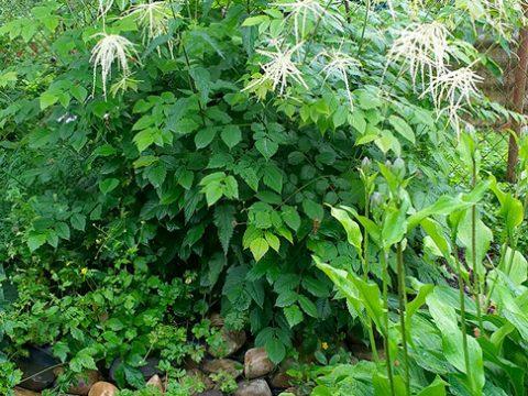 zahrada-12