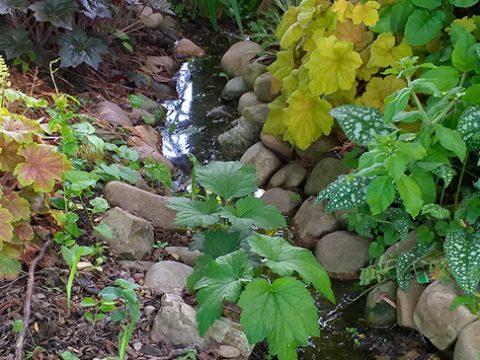 zahrada-31